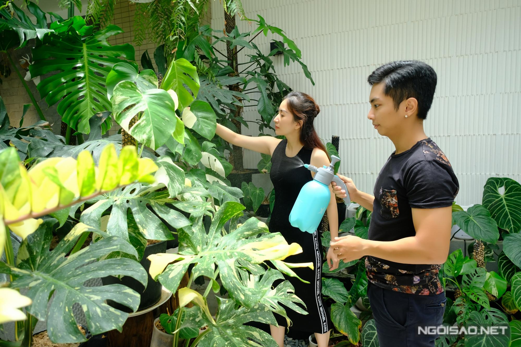 Mỗi ngày, Phan Hiển thường thức dậy sớm hơn để chăm sóc vườn cây kiểng giá trị cả tỳ đồng của họ. Đây là những loài cây vừa trang trí nội thất vừa có giá trị kinh tế cao. Ở Việt Nam, cộng đồng chơi kiểng lá xuất hiện 5 năm trở lại đây và phát triển mạnh trong năm 2020.