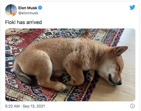 Bài đăng về chú chó cưng Floki của Elon Musk trên Twitter hôm 13/9. Ảnh chụp màn hình.