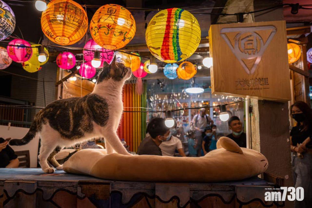 Tai O hiện chỉ có hơn 2.000 dân cư sinh sống, chủ yếu là những người lớn tuổi. Từng trải qua vụ hoả hoạn lớn, thiêu huỷ hoàn toàn làng chài, hiện nay, Tai O còn lại những căn nhà đơn sơ, nhiều màu sắc cùng những khu chợ ẩm thực ngoài trời, tạo nên nét độc đáo không đâu ở Hong Kong có được.