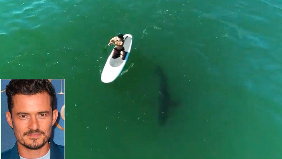 Orlando Bloom bên một con cá mập trắng.