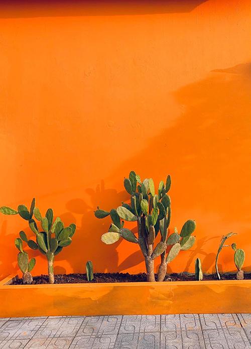 Vì yêu cả mảnh đất Đà Lạt nên chị làm các góc vườn gợi nhắc tới xứ sở mộng mơ với vách tường cam trồng xương rồng, còn trồng cẩm tú cầu và trang trí đèn ngoài trời ở một số góc. Vườn cũng có sẵn nhà cấp 4 đã xây được 2 năm, có hai phòng ngủ nhưng chị Như dự định đến khi được tuổi mới xây cất lại nhà tiện nghi hơn trong mảnh vườn.