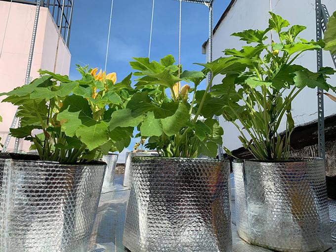 8X vượt khó làm vườn 30 m2 trĩu trái trên mái tôn, sân thượng  - page 2 - 8