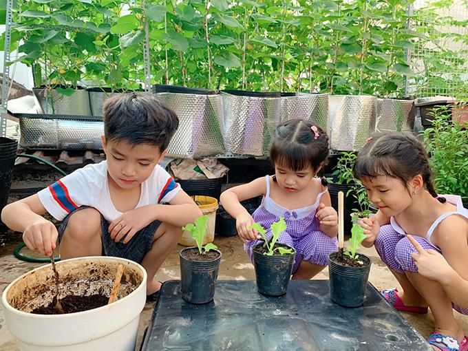 8X vượt khó làm vườn 30 m2 trĩu trái trên mái tôn, sân thượng  - page 3 - 3