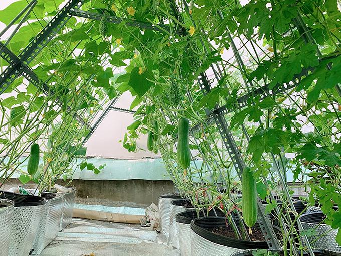 8X vượt khó làm vườn 30 m2 trĩu trái trên mái tôn, sân thượng  - page 3 - 8