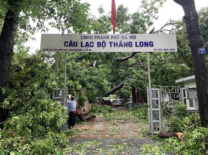 Cây đổ đè lên phần sân và mái câu lạc bộ. Ảnh: Nguyễn Ngoan