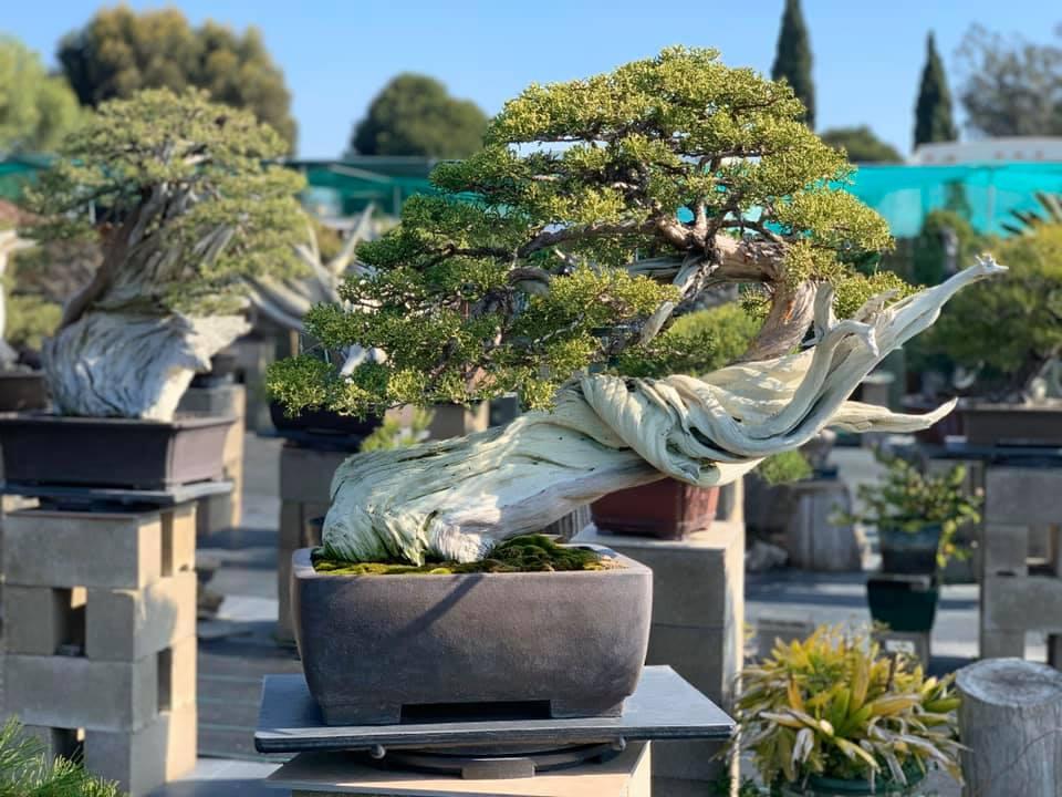 Bằng kiều tự tay xử lý hầu hết việc, như làm bệ đỡ đựng bonsai hay mái hiên bằng gỗ. Khu vườn bonsai của anh được bố trí tưới cây tự động.