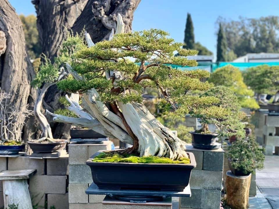 Đông đảo bạn bè lẫn khán giả xuýt xoa trước vườn bonsai vừa đẹp vừa có giá trị cao của Bằng Kiều.