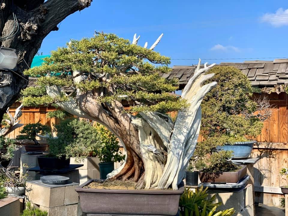 Hồi tháng 2/2021, nhà nam ca sĩ bị đột nhập và mất vài gốc bonsai. Sau đó, gia đình phải gia cố thêm vòng khóa quanh chậu để đảm bảo an toàn.